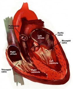 heart-lores-labeled